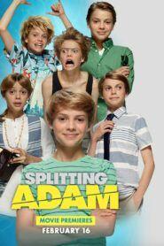 Rozdělený Adam