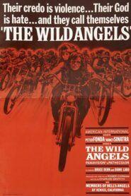 The Wild Angels / Divocí andělé